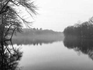 Topanemus Fog II