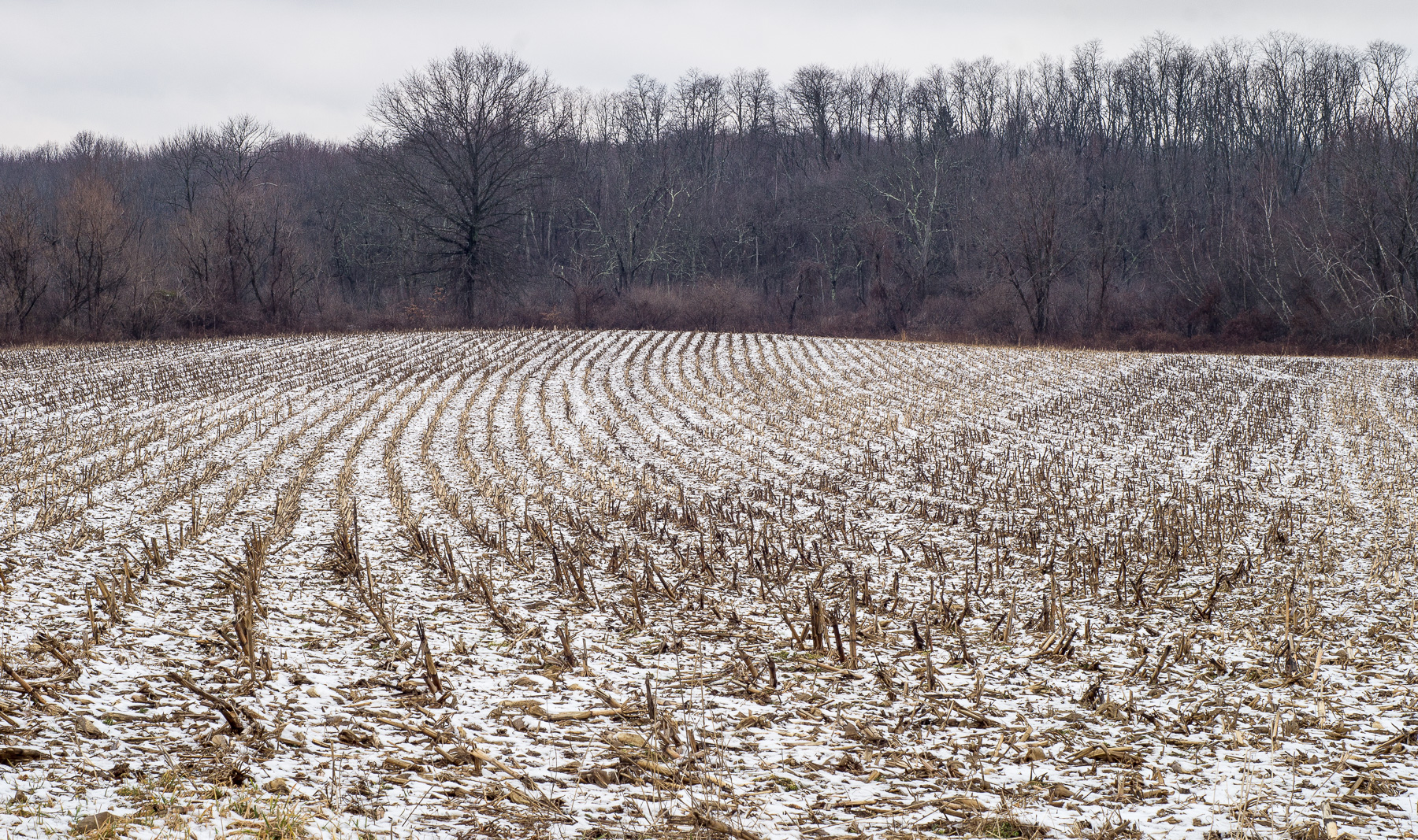 Snow in Rows