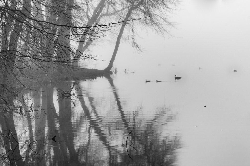 Topanemus Fog