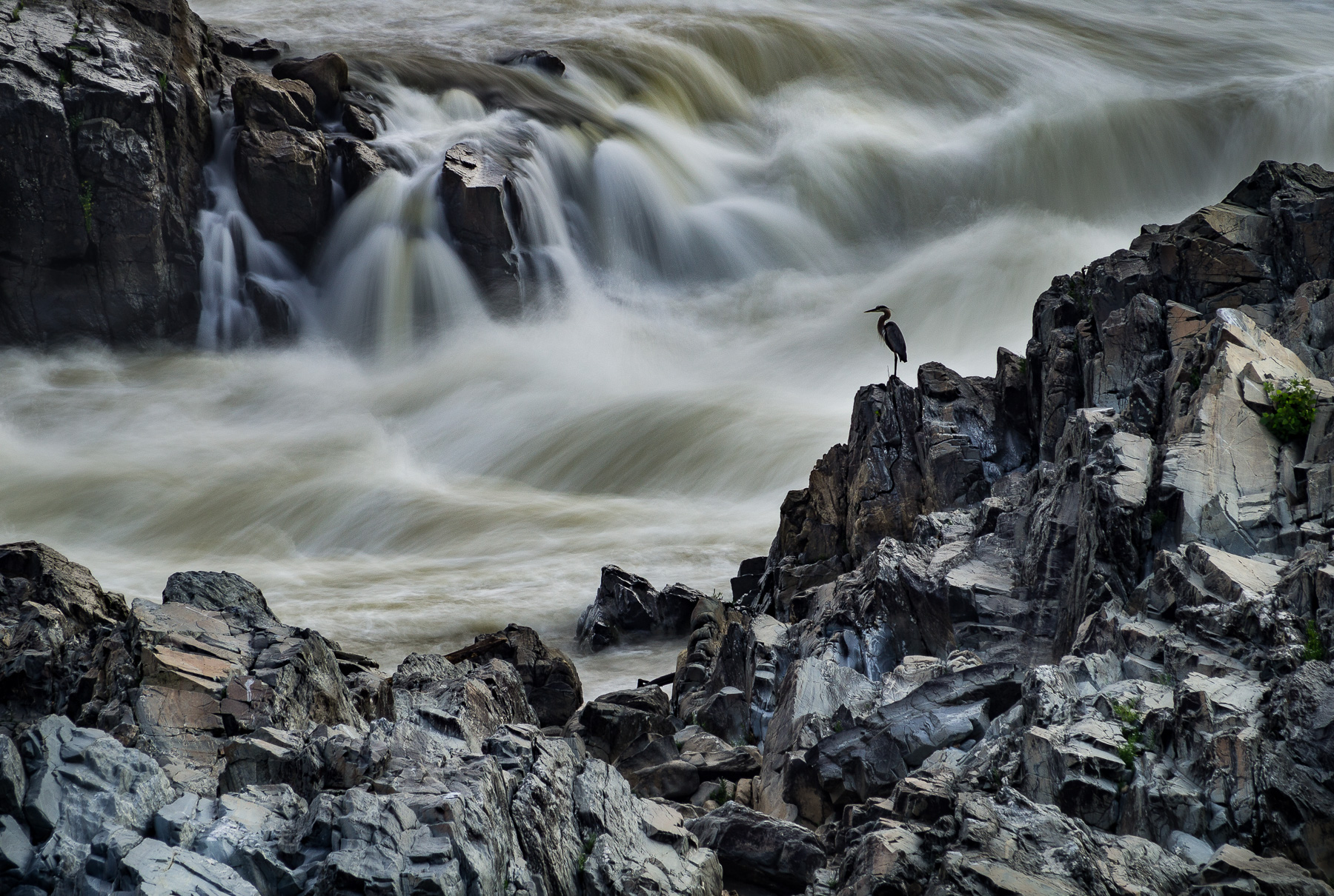 Heron on the Rocks