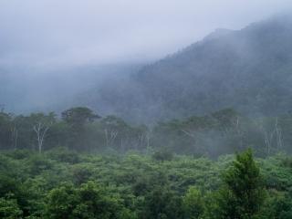 Shenandoah Fog