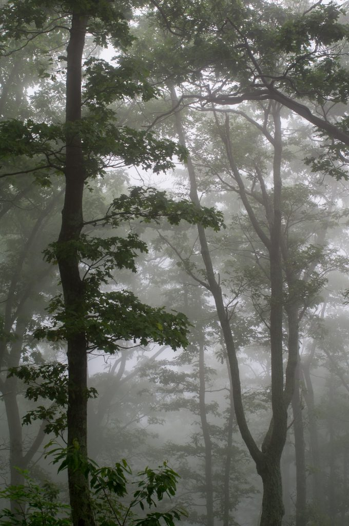 Shenandoah Fog II