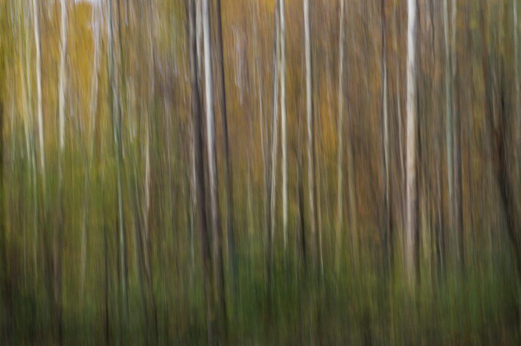 Slash Forest