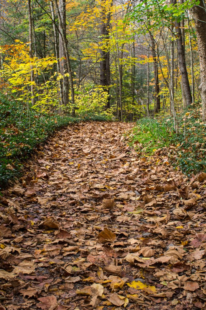 Path Through the Foliage