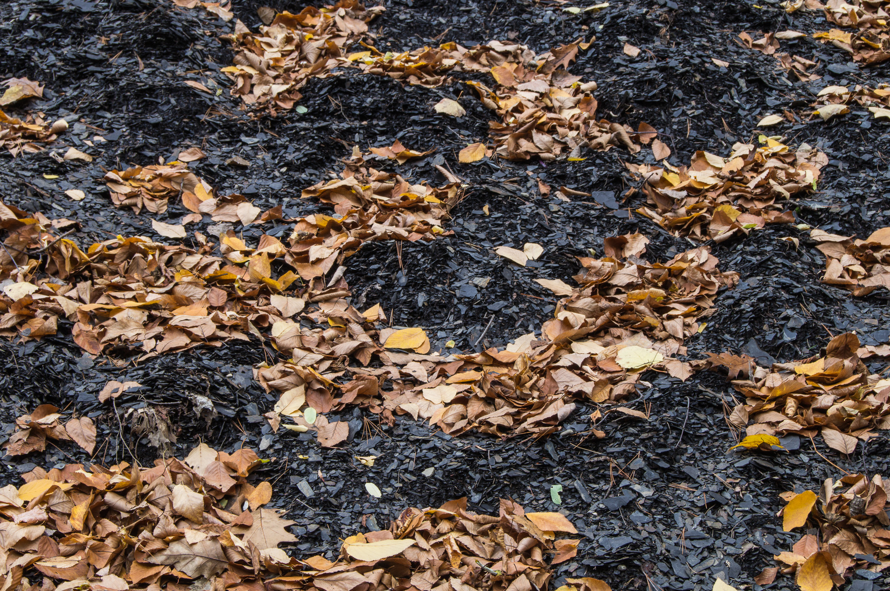 Leaves and Slate