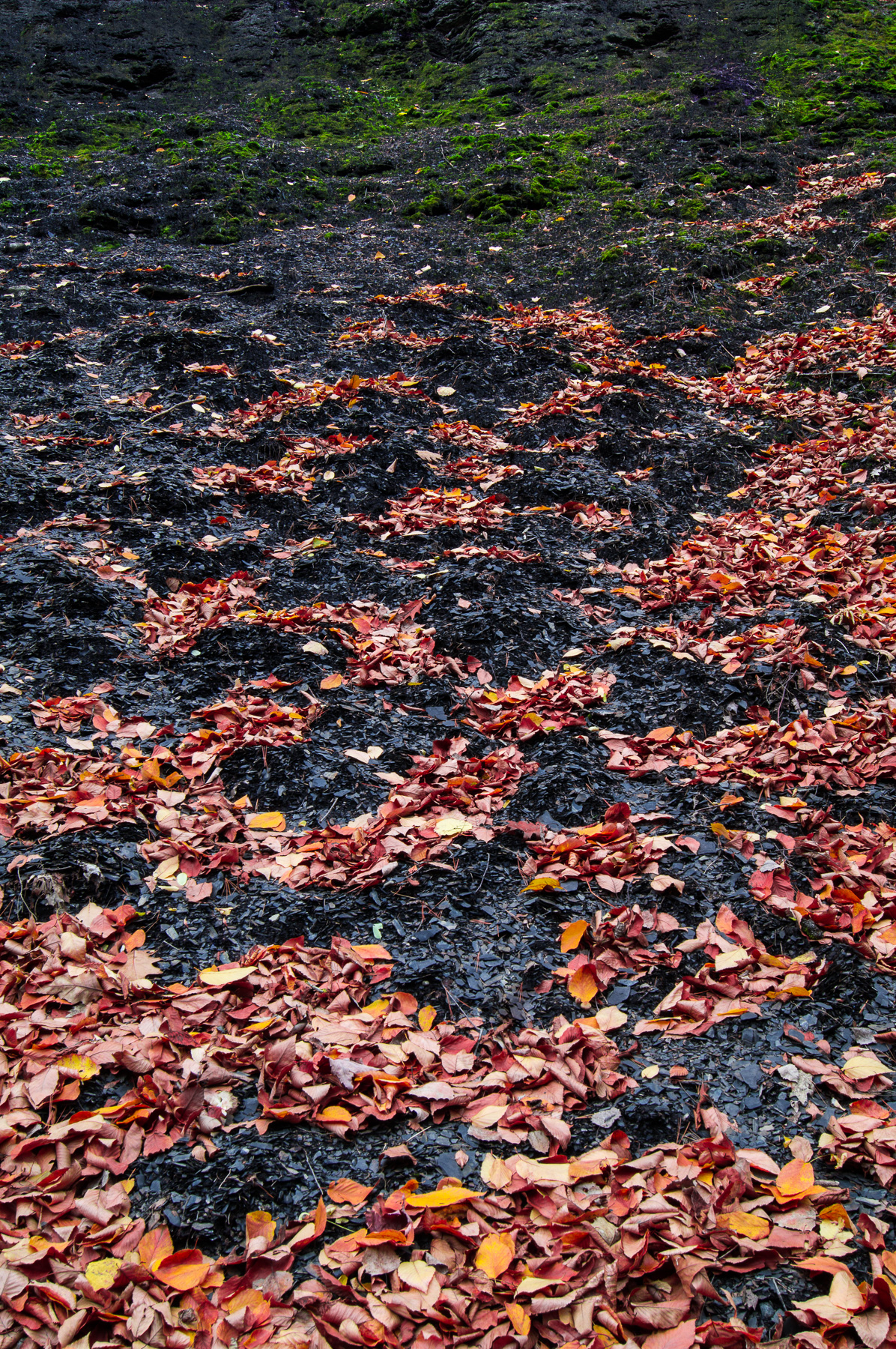 Leaves and Slate II